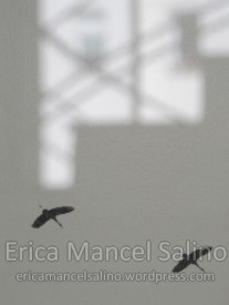 IMG_8142 Erica Mancel Salino mai 2016 Filirgrane 72dpi