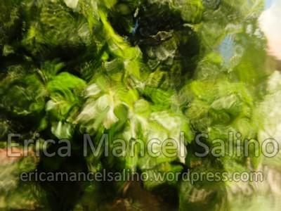photo DSCF5532 Erica Mancel Salino jardin Filirgrane 72dpi